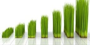 Grass growing looks like a bar chart