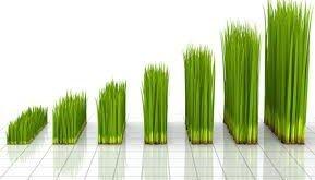 Grass growing looks like a bar chart